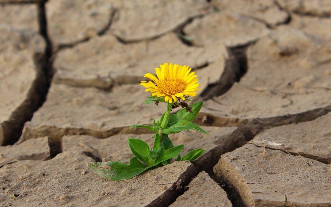 Von Widersprüchen, Trampelpfaden und dem Paradigmenwechsel
